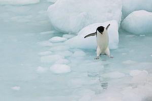 Springende Adelie Pinguin Antarctica van