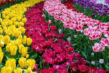 Niederländische Blumenfelder von Jayzon Photo