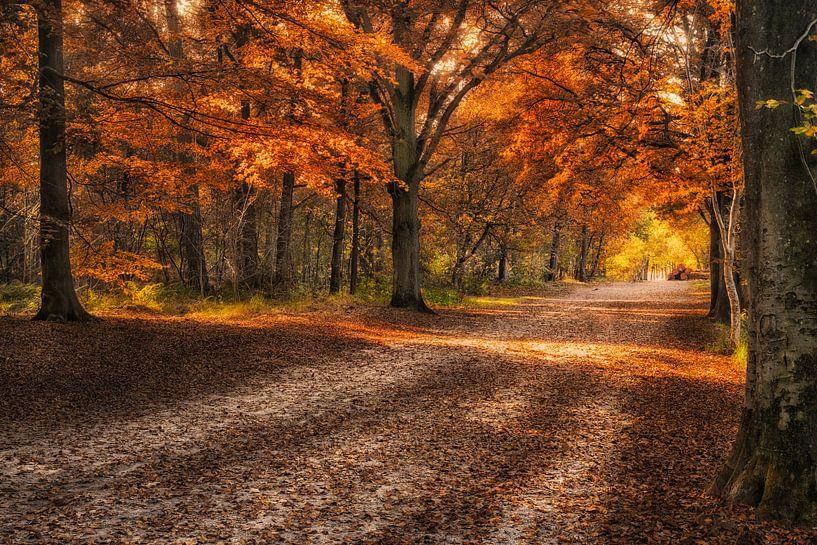 Herbst in Mastbos von Sander Poppe