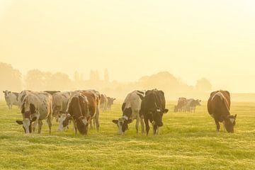 Koeien in de wei tijdens een mistige zonsopgang in de IJsseldelta van Sjoerd van der Wal