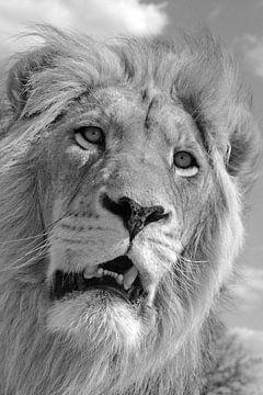 König der Löwen 5087 sw von Barbara Fraatz