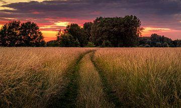 Le chemin du coucher de soleil sur Wim van D