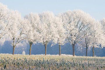 winterse bomenrij 2 Sint-Michielsgestel von Arnoud Kunst