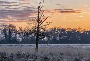 einsamer Baum auf der kalten Heide von Tania Perneel