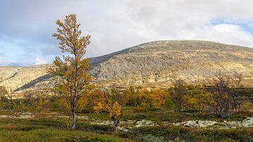 Berkenboom in herfstkleur van Barbara Brolsma