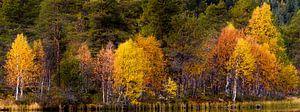 Herfstkleuren bij meer in Noorwegen