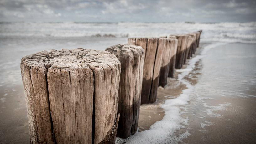 Poleheads in Nahaufnahme am Strand von Zeeland von Michel Seelen
