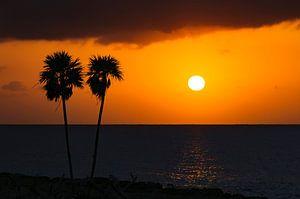 Sunset Palmen van