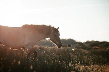 Wild Horse. van Dylan Barkley
