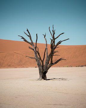 Eenzame boom van Youri Zwart