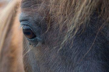Oog van een pony sur Nicky Staskowiak