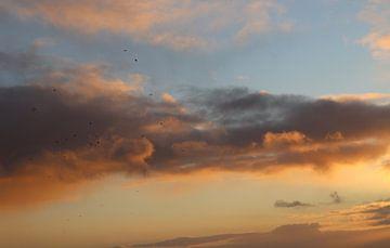 Vogels in de avondlucht van Noor van Duijvenboden