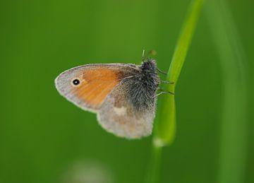 Kleines Wiesenvögelchen van Iris Volkmar