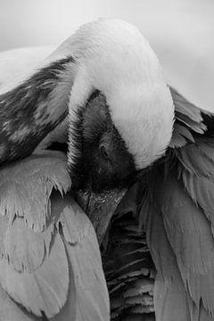 Kraanvogel von Robert Loomans
