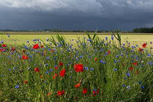 Zomer landschap van de polder in Nederland met klaprozen en onweersbui.