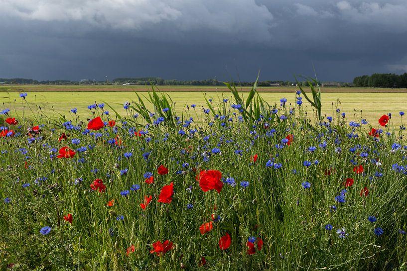 Zomer landschap van de polder in Nederland met klaprozen en onweersbui. van Eyesmile Photography