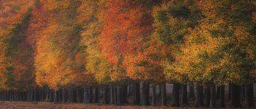 Lijn van bomen van Arjen Noord