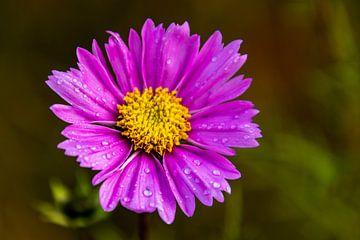 Lila Blume im Wald von Ramon Van Gelder