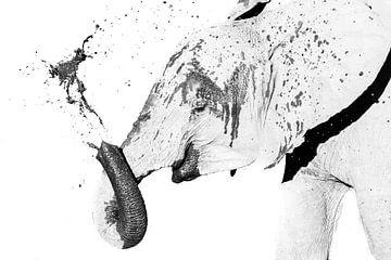 Elefant im Schlamm von Robert Styppa