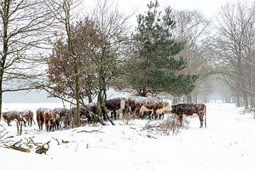 Winter in den Niederlanden. Rijssen und Umgebung. von Albert ten Hove