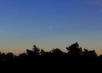 maan boven het bos bij zonsondergang van wiesje van den broek