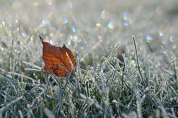 Eiszeit von zwergl 0611