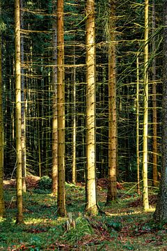 Im Wald von Johnny Flash