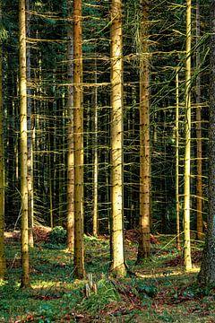 In het bos van Johnny Flash