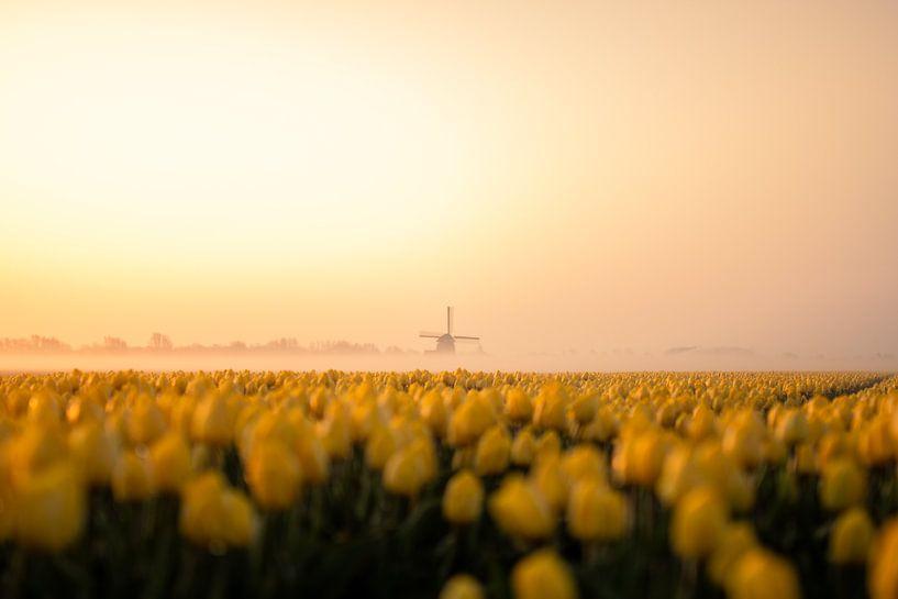 Tulpen veld Noord Holland van Thomas Bartelds