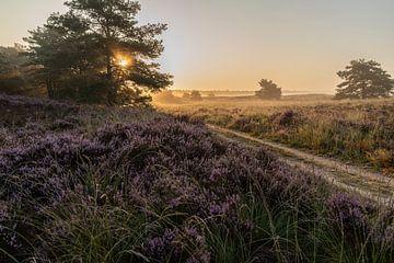 Sonnenaufgang auf der blühenden Heide von André Dorst