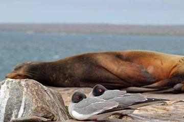 zwaluw staart meeuwen voor een zeeleeuw op Galapagos van Marieke Funke