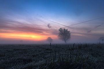 Mist op een weiland in de ochtend van Marlou Beimers