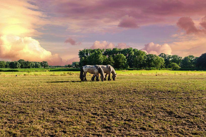 Paarden tegen een betoverende Lucht van Brian Morgan