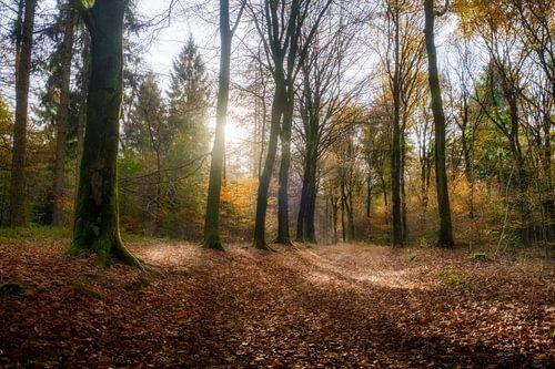 Nevelig herfst bos