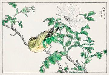 Illustration mit Bulbul und Rosa Rugosa von Numata Kashu von Studio POPPY