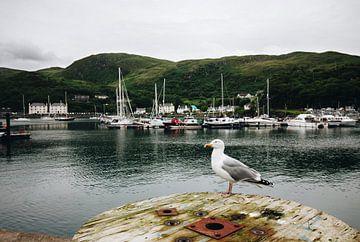 Ein Hafen in Schottland mit einer Möwe von Katrin Friedl