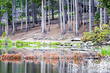 Rustgevend bos in de Rocky Mountains van Devin Meijer