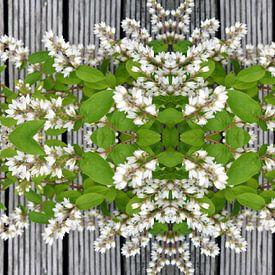 Prunus van EH? by ILSEHA