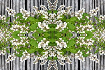 Prunus von EH? by ILSEHA