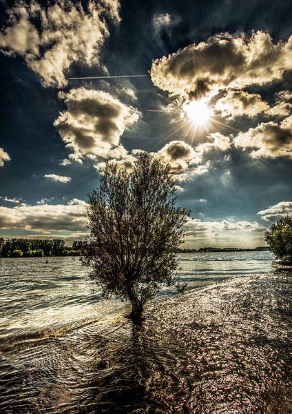 Boom in De Rijn van Harrie Muis
