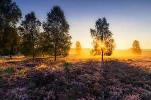 gouden ochtend op de Lüneburger Heide van Daniela Beyer