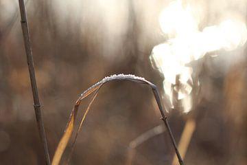Ein Hauch von Sonne von Sabine Tilburgs