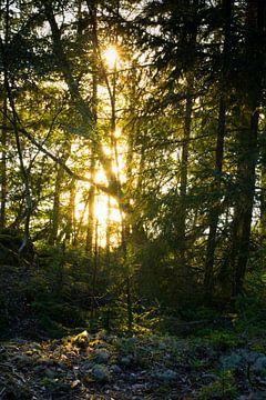 Zonlicht door de Bomen von Lenslicht Fotografie