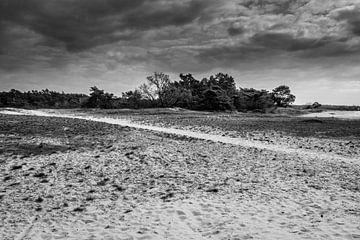 Kootwijker Sandebene in Schwarz-Weiß von Tessa Louwerens