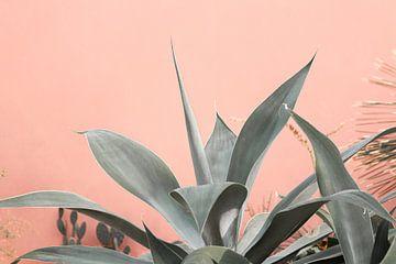Exotische vetplant steekt af tegen roze muur van HappyTravelSpots