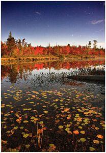 Indian summer, meer en bos bij volle maan van