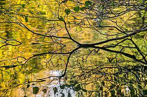 De gouden vijver