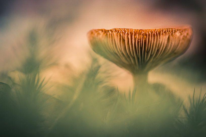 Het herfstgevoel van Martzen Fotografie