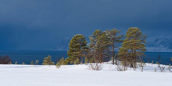 Dennenbomen langs een Fjord in Noord Noorwegen voor een sneeuwbui van Sjoerd van der Wal