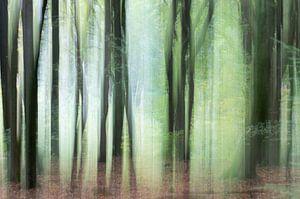 Bomen in beweging 1 van